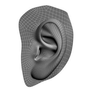 Фото 3D моделирования уха