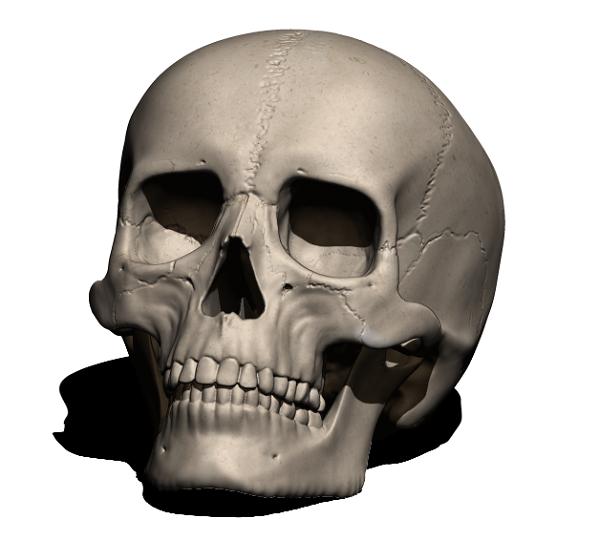 Фото 3D моделирование человеческого черепа